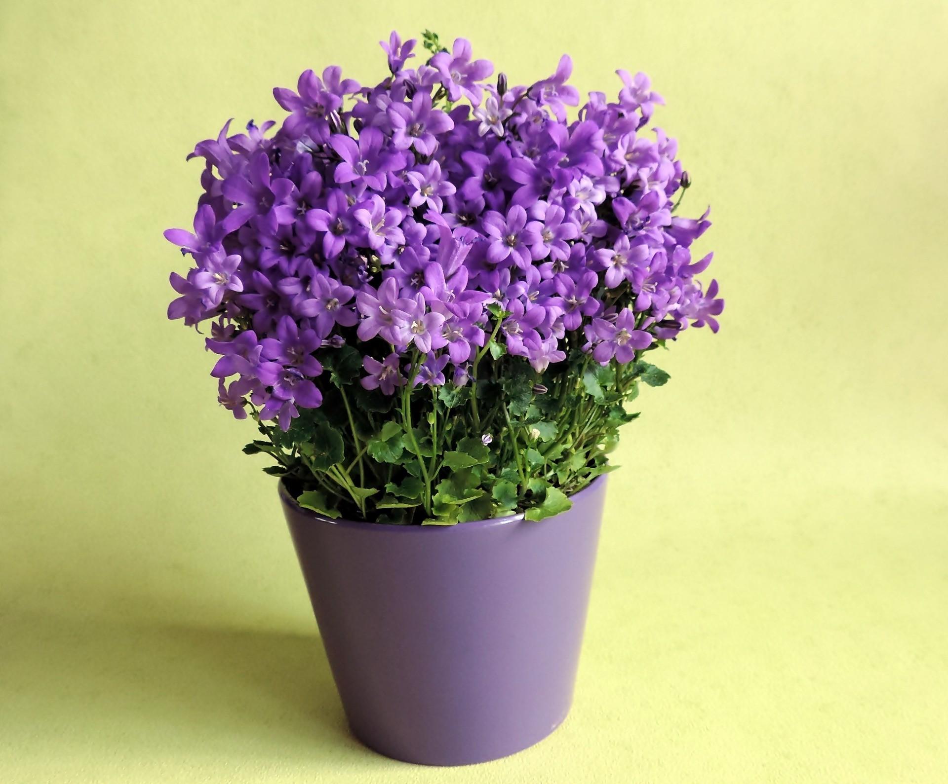 jak-zachecac Dolores-pozytywna-dyscyplina dziecko-jak-kwiat zadbaj-o-dziecko